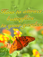Attract Butterflies To Your Garden by Unknown